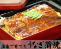 【無投薬】温泉で育てたうなぎ蒲焼(中) ※5尾以上送料無料
