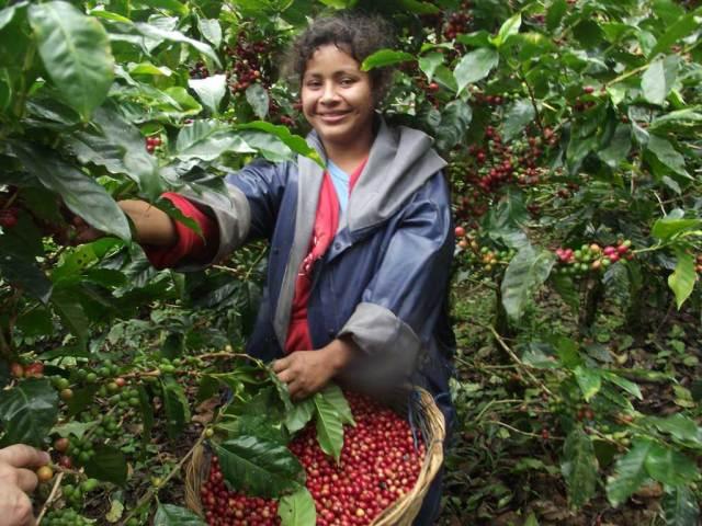 ニカラグア ラグーナ農園マラゴジーペ  500g