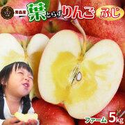 《送料無料》【葉とらずりんご ふじ5kg ファーム】 葉とらずりんご ゴールド農園 青森りんご [※産地直送のため同梱不可]