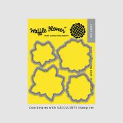 【ワッフルフラワー/waffle flower】ダイ - Succulents