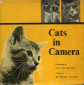 cats in camera