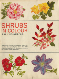 SHRUBS IN COLOUR