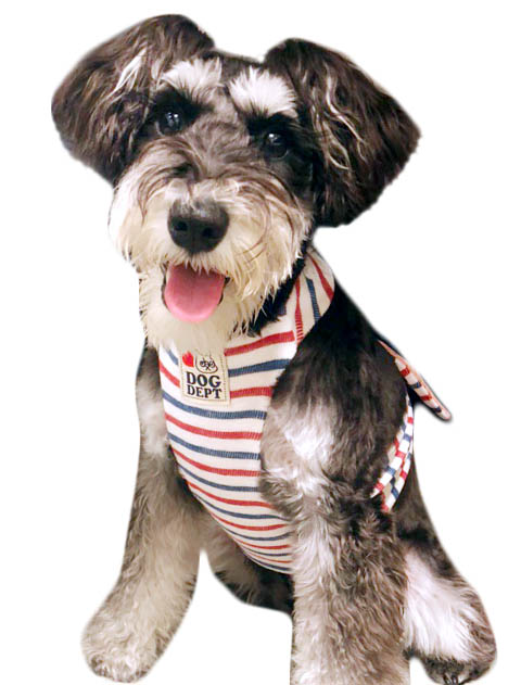 【まとめ割引対象】<br>【DOG WEAR】スラブボーダーノースリーブ