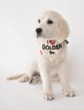 【DOG GOODS】MY DOG バンダナ
