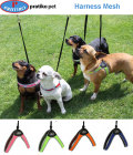 PRATIKO・プラティコ レースメッシュハーネス 超小型、小型犬用(シュナウザー、ジャックラッセルテリア) サイズ2.5