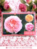 <ドリプレ・ローズガーデン:オリジナル商品♪>ガーデンのバラのポストカード付き!「ガーデンローズティー:2袋パック」