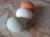 ひすいたまご、鶏卵、赤たまご