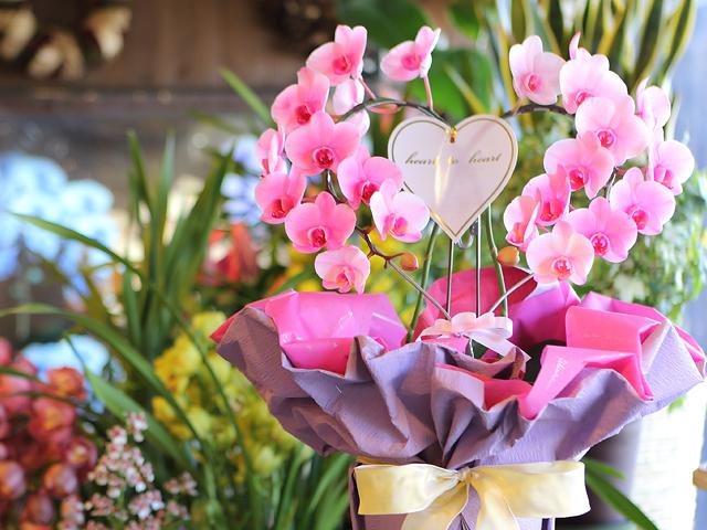 ピンクエレガンスリング型ミディ胡蝶蘭