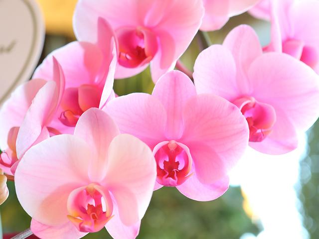 http://image1.shopserve.jp/ec-come.com/pic-labo/llimg/EHI00001-2.jpg?t=20151225145219