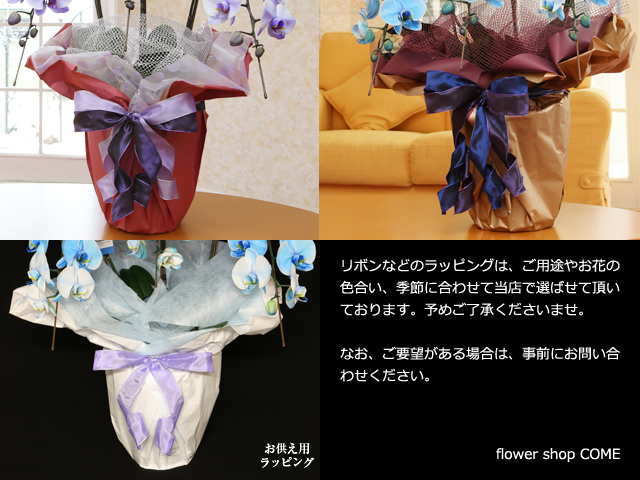 青い胡蝶蘭(ブルーエレガンス)3本立~ラッピングサンプル