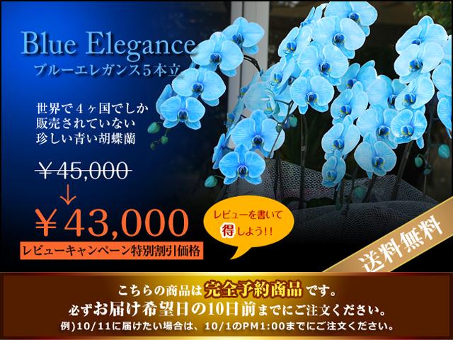 青い胡蝶蘭5本立
