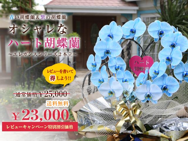 ハート型の胡蝶蘭[2本立]~青い胡蝶蘭&紫の胡蝶蘭~