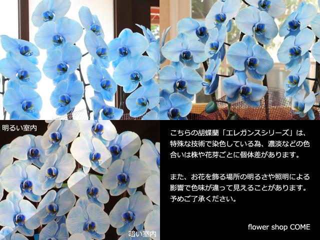 青いハート型胡蝶蘭~色合いサンプル