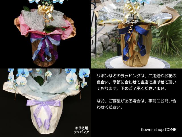 ハート型の胡蝶蘭[2本立]ラッピングサンプル~青い胡蝶蘭&紫の胡蝶蘭~