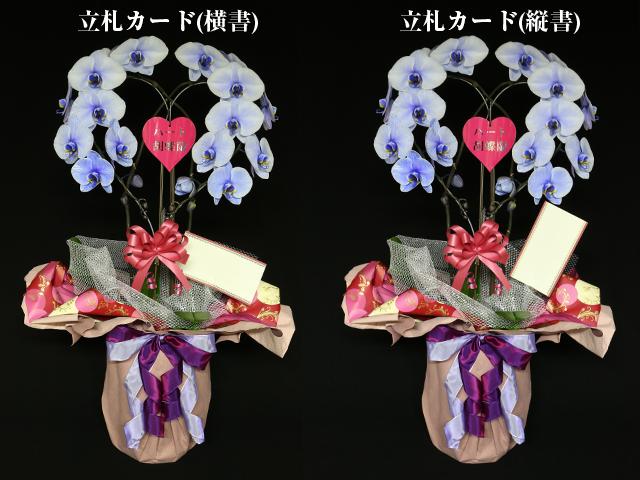 ハート型の青い胡蝶蘭