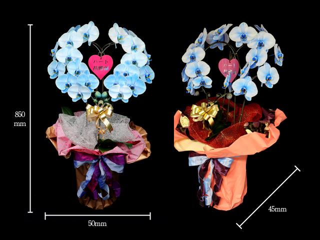 ハート型青い胡蝶蘭