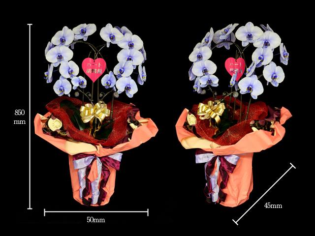 ハート型紫の胡蝶蘭