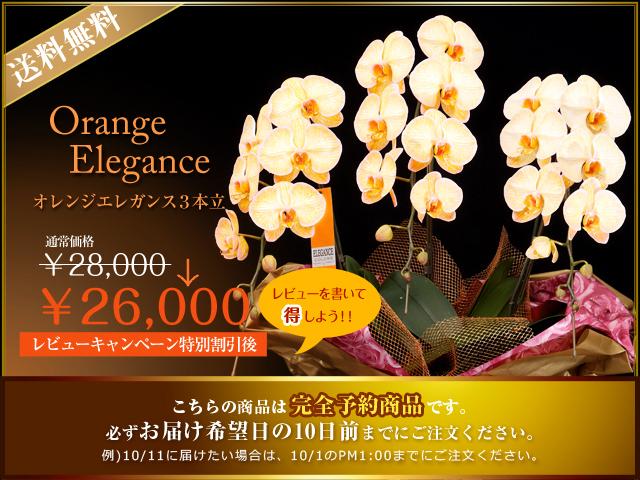 オレンジエレガンス
