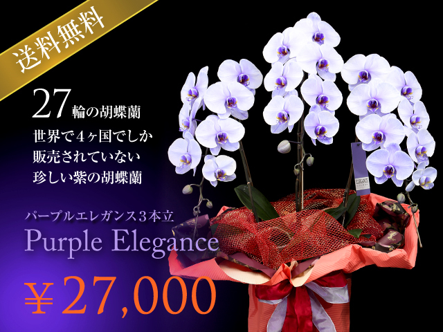 紫の胡蝶蘭~パープルエレガンス[3本立]