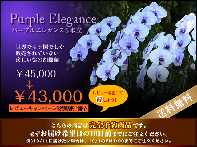 紫の胡蝶蘭5本立