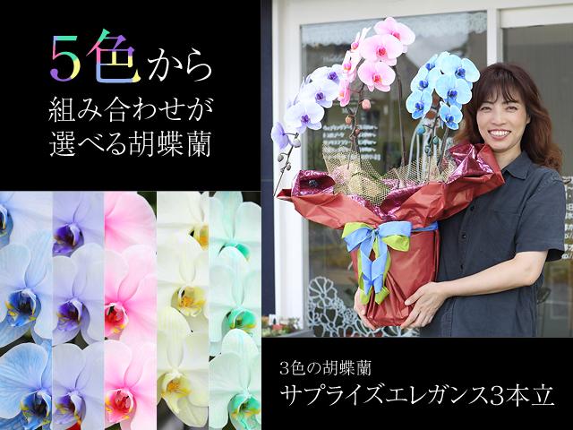 3色の胡蝶蘭サプライズエレガンス3本立