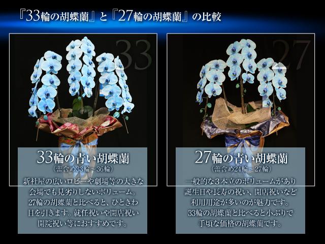 33輪の胡蝶蘭プレミアムブルーエレガンス3本立