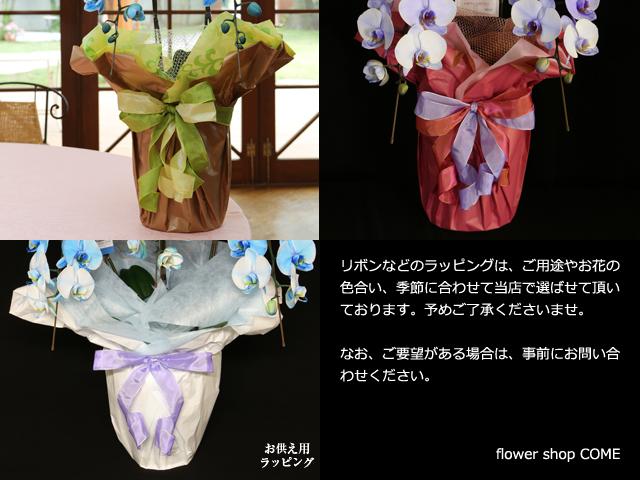 紫の胡蝶蘭(パープルエレガンス)2本立~色合いについて