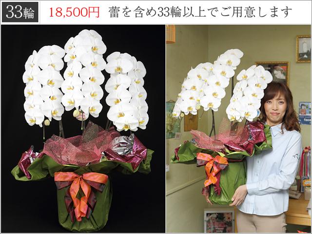 LED白い胡蝶蘭