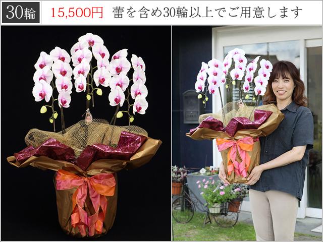 LED白赤の胡蝶蘭