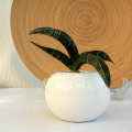 サンスベリア フィッシェリー ボールポットs観葉植物通販・販売