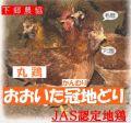 JAS取得 下郷農協 大分県産 冠地鶏 丸鶏 2kg前後