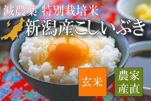 特別栽培米 新潟県産こしいぶき 玄米