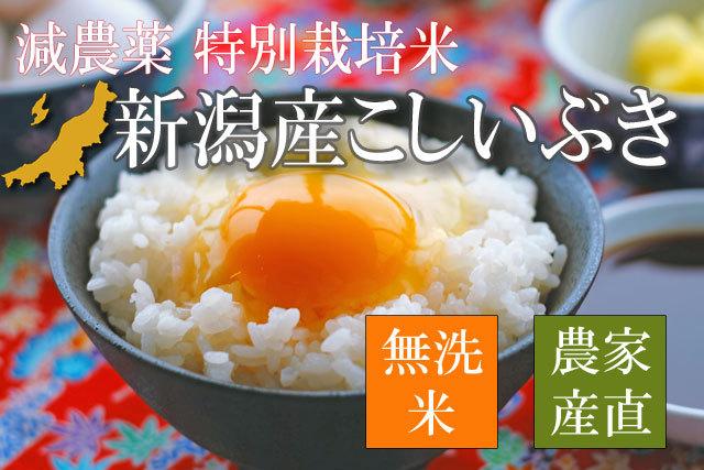 特別栽培米 新潟県産こしいぶき 無洗米