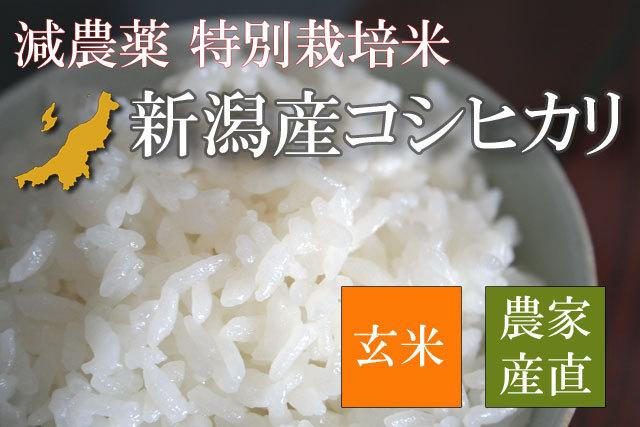 【新米 新潟県認証米】減農薬 特別栽培米 新潟産コシヒカリ 玄米 平成28年産 5kg