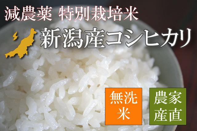 特別栽培米 新潟産コシヒカリ 無洗米