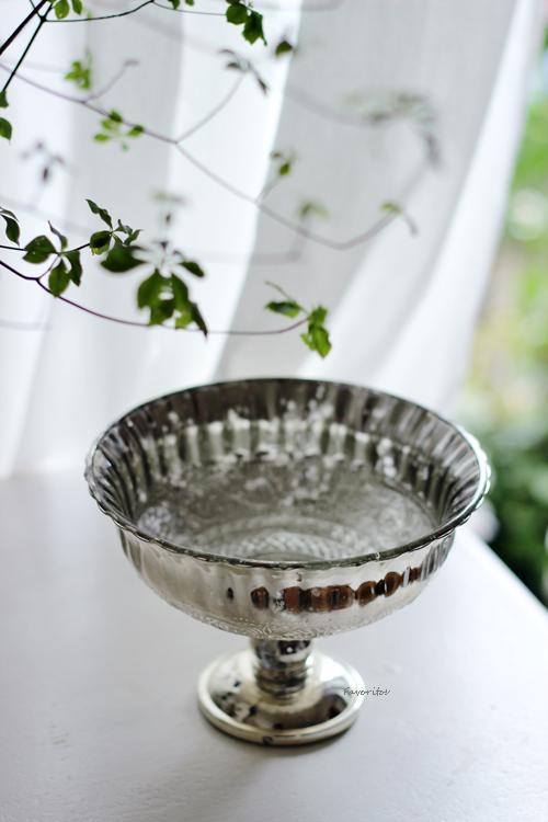 リブ シルバーカップ