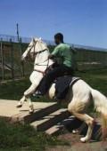 モハメッド・ブーロイサ写真集 : MOHAMED BOUROUISSA : HORSEDAY
