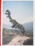 �ڥ��������ۥ����󥻥�ȡ��ǥ�֥�å��̿��� : V.D. : VINCENT DELBROUCK : SOME WINDY TREES #1