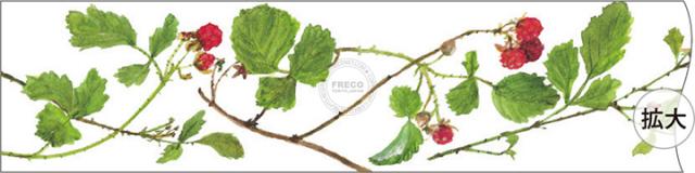 フロンティアマスキングテープ Fujico ベリー(MSK-008)【クロネコDM便OK】