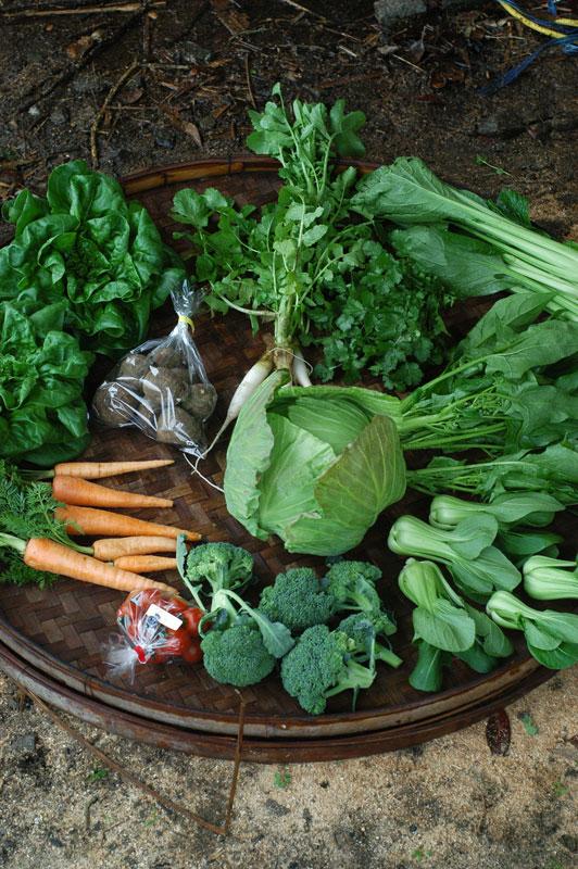 【4週分をまとめて注文/定期購入と割引率は一緒なのでなるべく定期購入でお願いします】熊本から新鮮野菜●自然栽培・無農薬・減農薬のオーガニック野菜セット