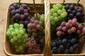 秋のお楽しみ3回セット☆色いろぶどうの詰め合わせ「自然派の葡萄 ミックス」(中箱×3・送料別)