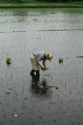 【28年産新米】無農薬、無化学肥料栽培☆熊本産「小川農場の米」(5キロ)