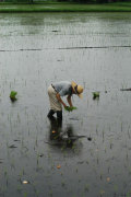無農薬、無化学肥料栽培☆熊本産「小川農場の米」(5キロ)