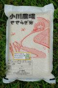 【定期購入●割引率は四回コースと同じ●ご注文の手間をはぶけます 】無農薬・無化学肥料●熊本産「小川農場の米」(5キロ)
