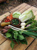 【隔週発送コース●4回分まとめてご注文●熊本から新鮮野菜セットを宅配●自然栽培、無農薬、減農薬野菜栽培