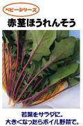 赤茎法蓮草