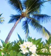 Hawaii Kona (Extra Fancy)