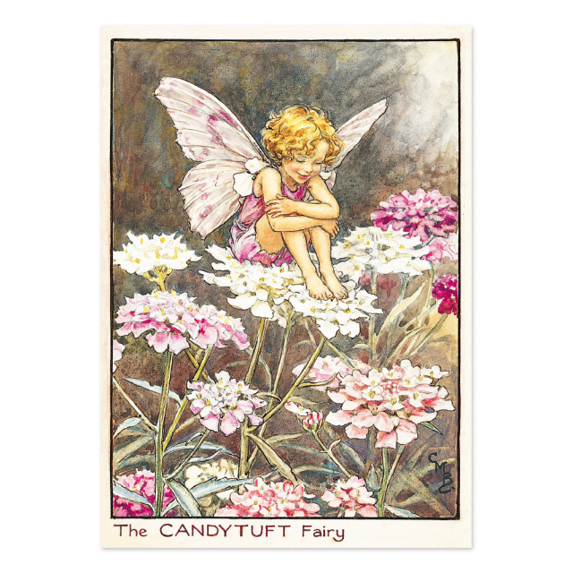 FLOWER FAIRIES ポストカード<Candytuft Fairy>