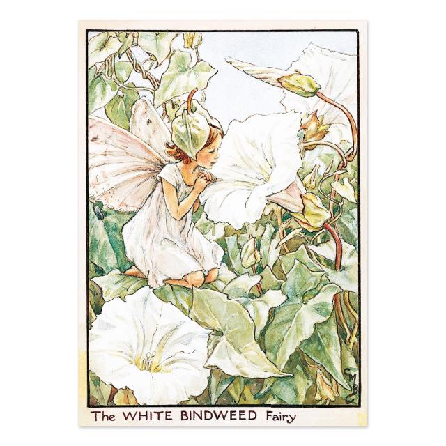 FLOWER FAIRIES ポストカード<The White Bindweed Fairy>