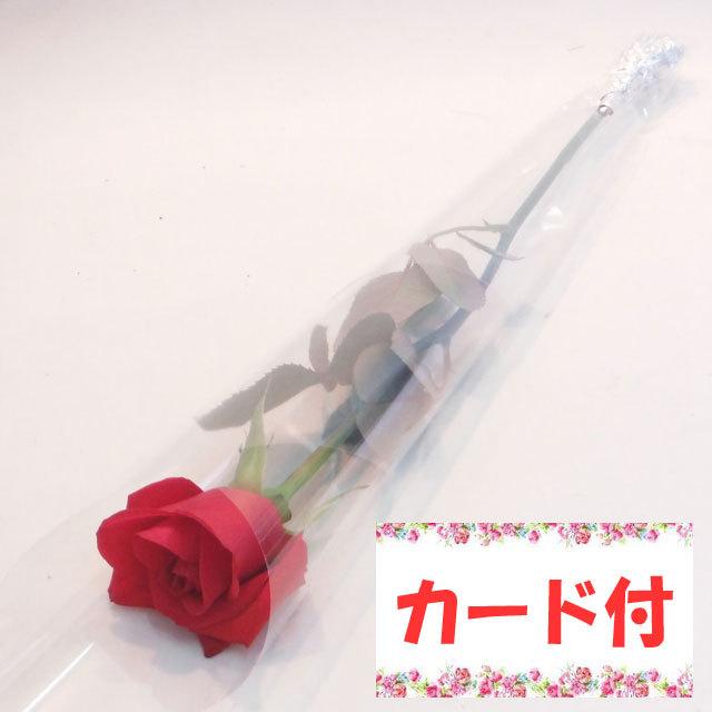 【1本ラッピング】バラ《カード付き・リボンなし》:(色おまかせ10本セット) /Mサイズ〔注文から4日以降のお届け〕